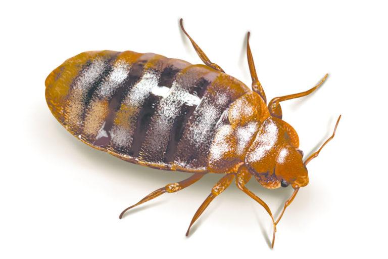 Jak się pozbyć karaluchów